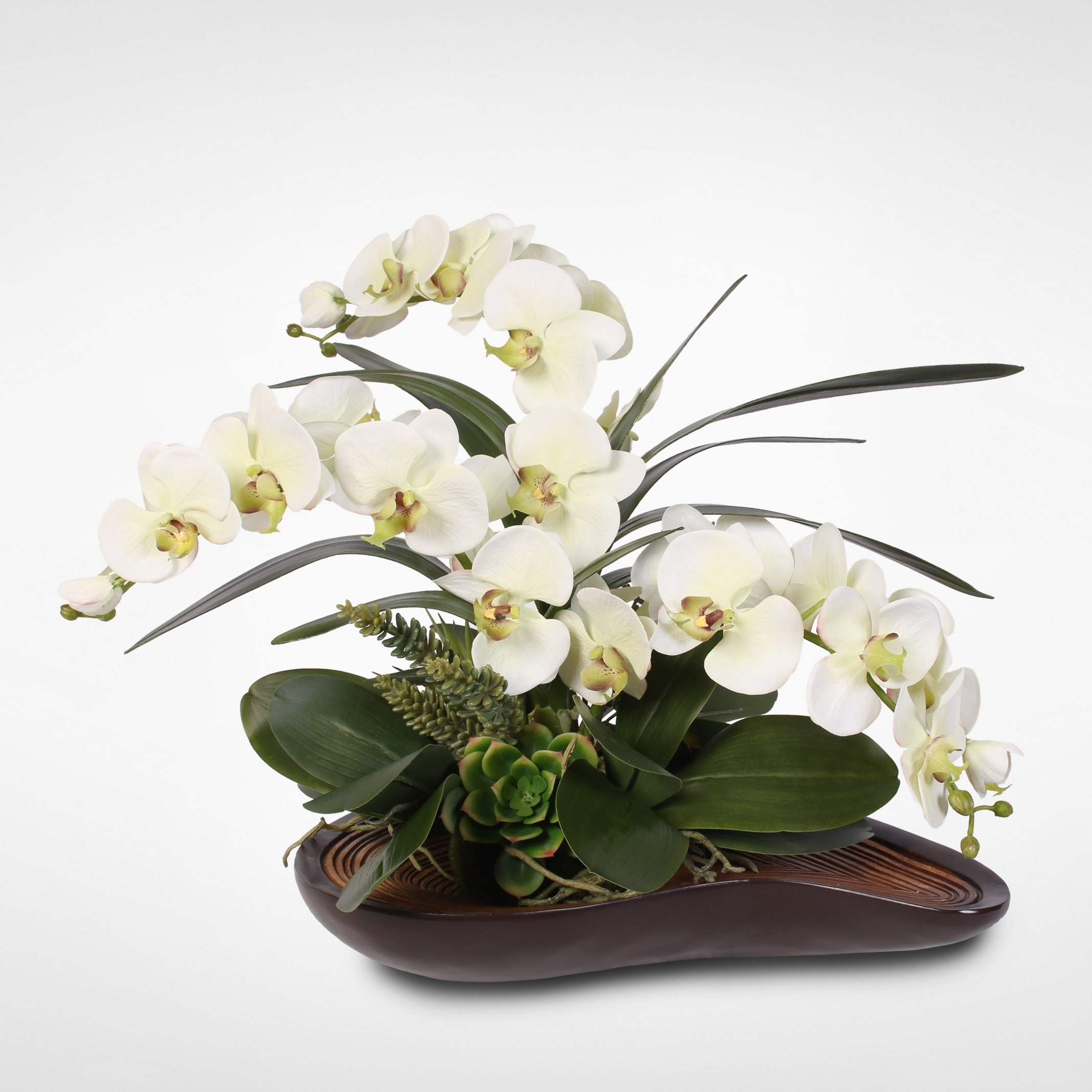 Green Phalaenopsis Orchid & Artificial Succulents in Curved Wooden Bowl
