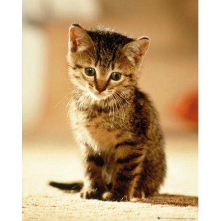 Kitten Sitting Striped Cat Adorable Cute Kids Room Poster 16X20