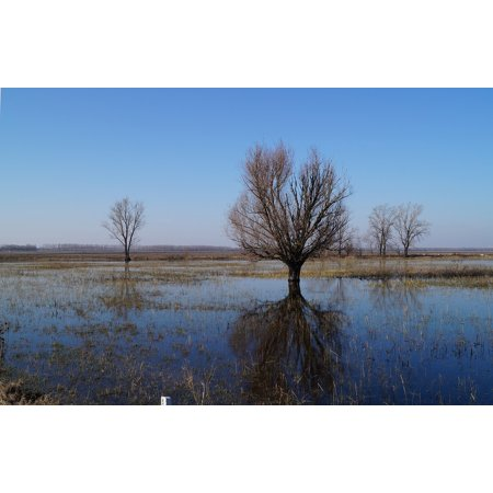 Hungarian Water - Peel-n-Stick Poster of Landscapes Mood Nature Wood Water Plains Hungary Poster 24x16 Adhesive Sticker Poster Print
