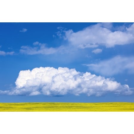 Cumulus Clouds Building Over Canola Field Pembina Valley Manitoba Posterprint
