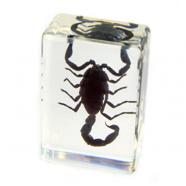 ED SPELDY EAST PW113 Paperweight  small  Black Scorpion