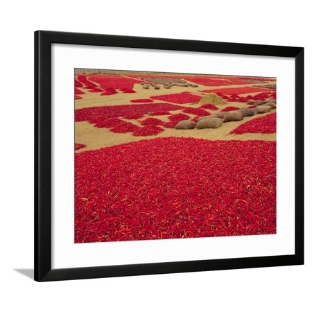 Picked Red Chilli Peppers Laid out to Dry, Rajasthan, India Framed Print Wall Art By Bruno Morandi