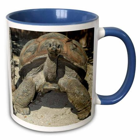 3dRose USA, Florida, Orlando, tortoise, Gatorland. - Two Tone Blue Mug,