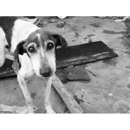 LAMINATED POSTER Abandoned Sad Stray Dog Man's Best Friend Look Dog Poster Print 24 x (Best Mens Frames)