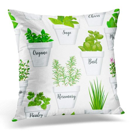 ARHOME Big of Culinary Herbs in White Pots with Labels Green Growing Basil Sage Rosemary Chives Thyme Parsley Throw Pillow Case Pillow Cover Sofa Home Decor 16x16 Inches