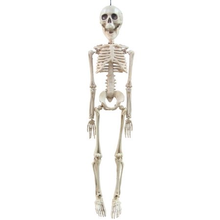 20 inch Faux Skeleton - Halloween Decoration