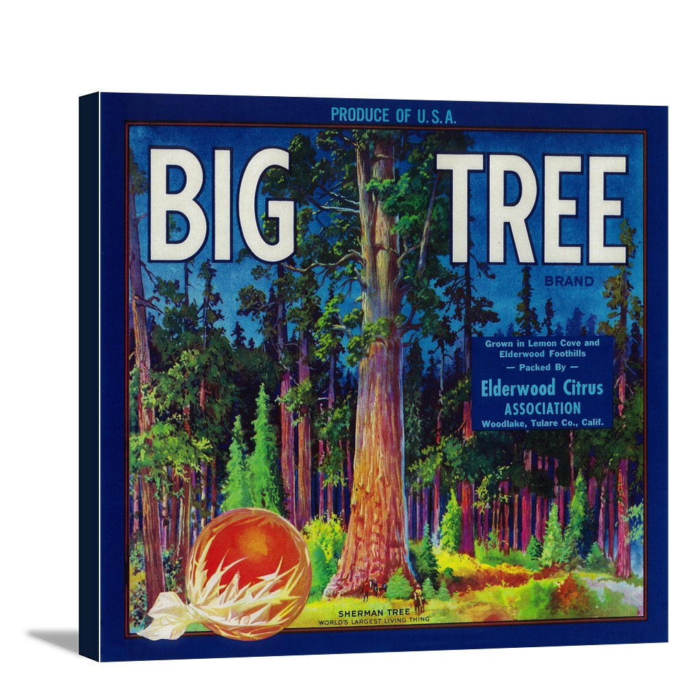 Big Tree Orange Label (12x11 Gallery Wrapped Stretched Canvas)
