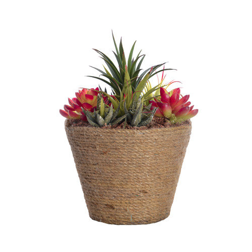 10.5-in Tall Succulents in Round Hemp Rope Container