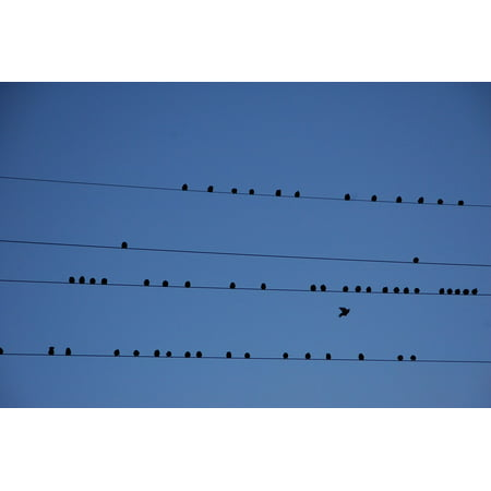 LAMINATED POSTER Migration Birds Partition Wire Poster Print 24 x 36