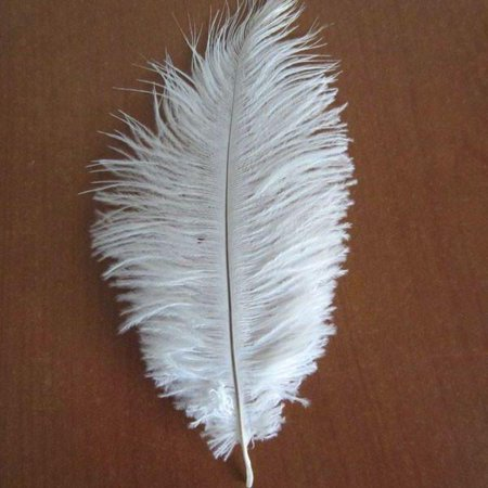Ostrich Feather Decorative Centerpiece, 15-Inch, 1-Piece, White (Ostrich Feather Centerpiece)
