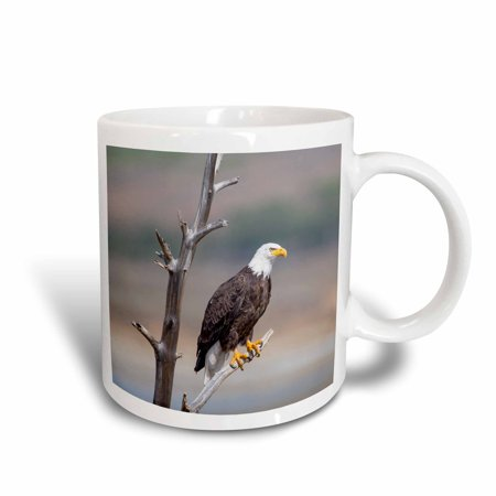 3dRose Wyoming, Bald Eagle roosting on snag. - Ceramic Mug, 11-ounce