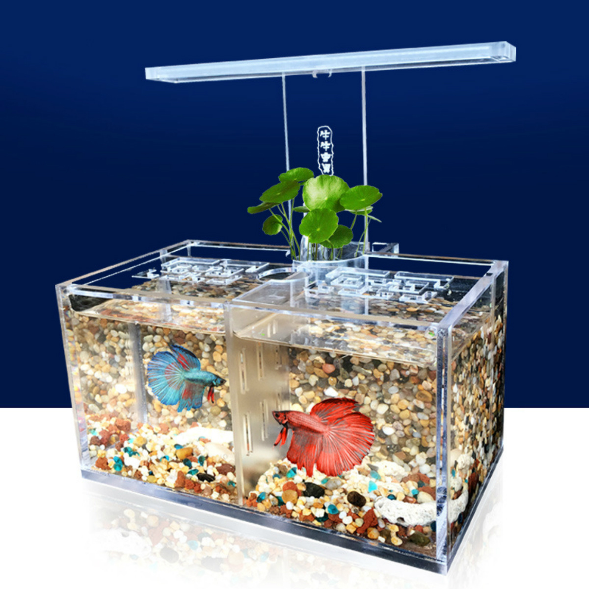 led light acrylic clear aquarium mini betta fish tank desktop water ...