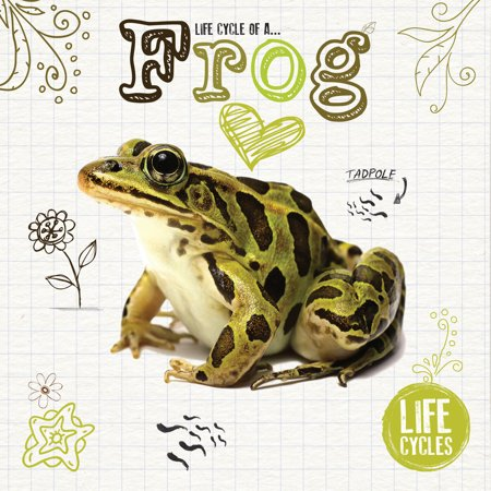 Life Cycle of a Frog (Life Cycle Frog)