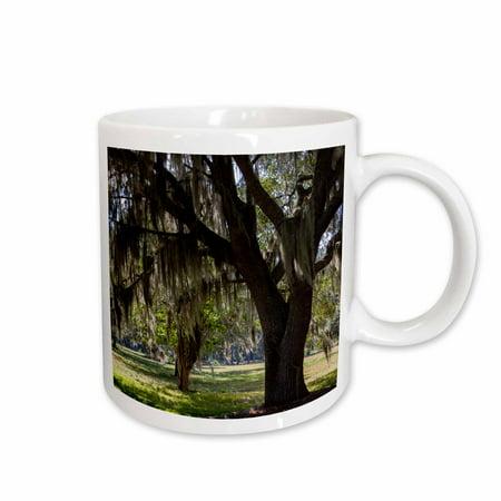 3dRose Georgia, Fort Frederica National Monument, live oak trees - Ceramic Mug, 11-ounce