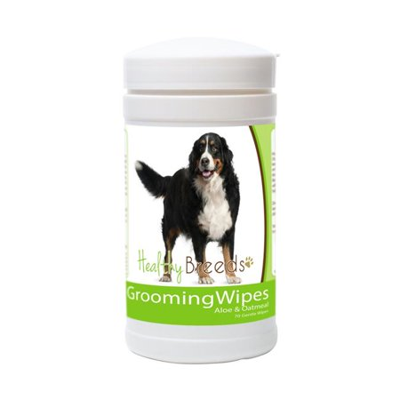 Healthy Breeds 840235151562 Bernese Mountain Dog Grooming