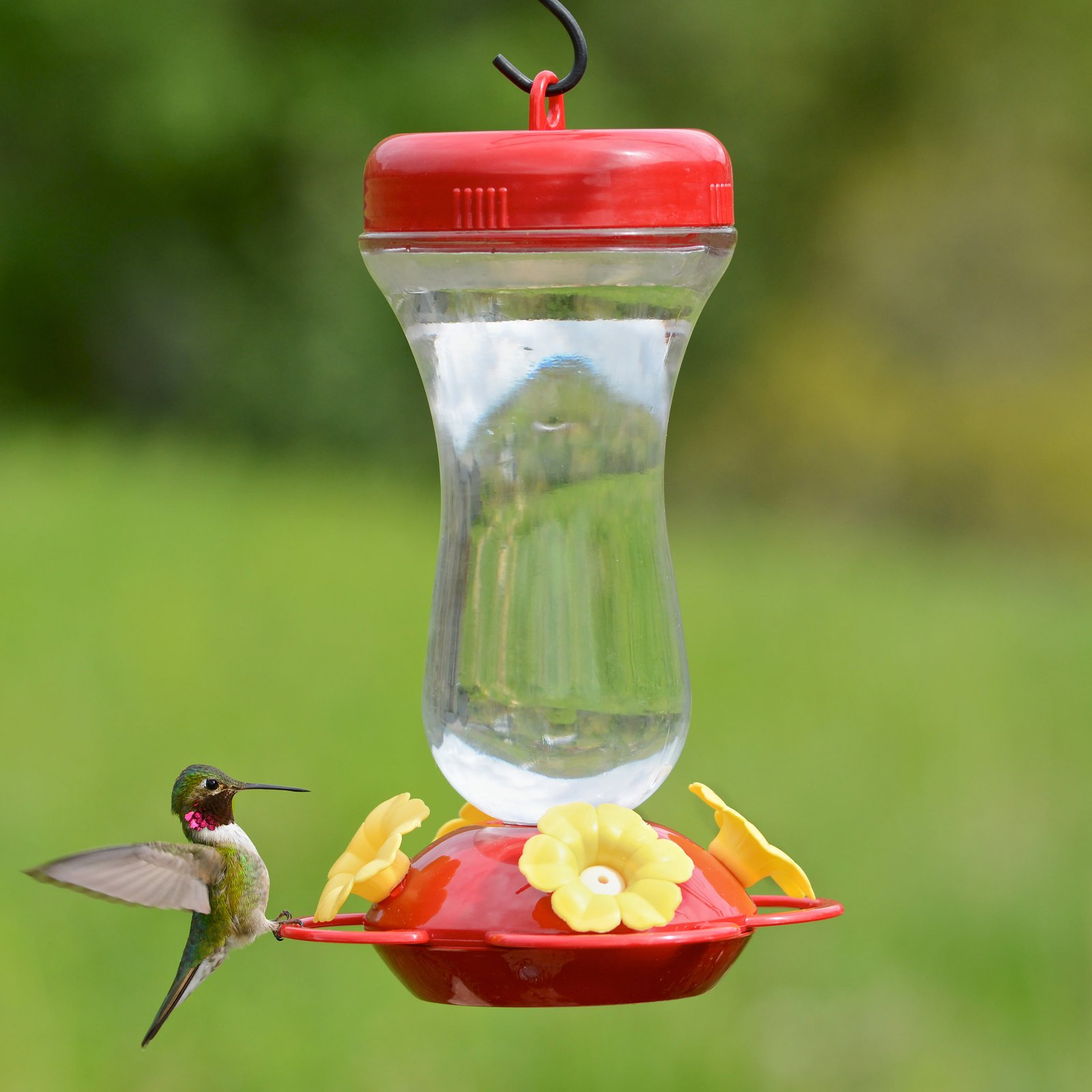 Perky Pet Products 16 oz Glass Top Fill Hummingbird Feeder