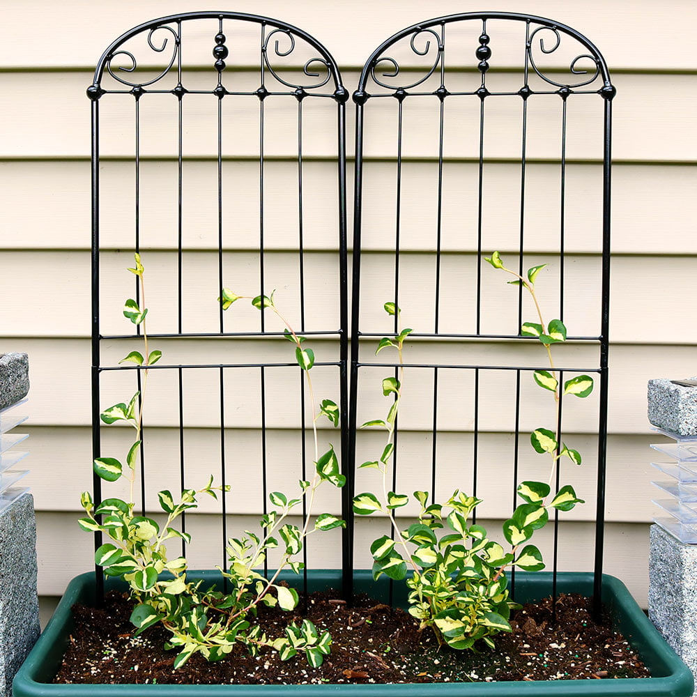 Sunnydaze 32 Inch Traditional Garden Trellis for Climbing Plants, Set of 2 by Sunnydaze Decor