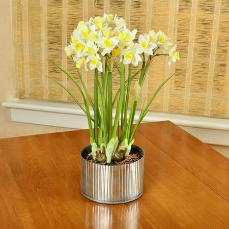 - Picnic at Ascot Artificial Daffodils in Rustic Metal Planter