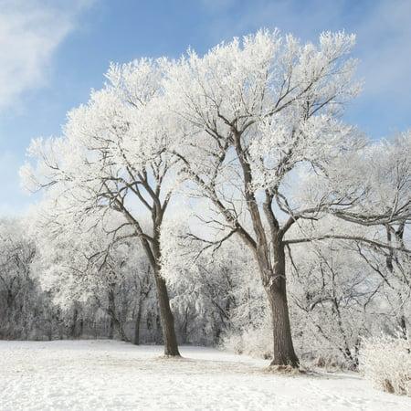 Posterazzi Winnipeg Manitoba Canada Snow On The Ground And Trees Canvas Art - Keith Levit  Design Pics (24 x (Winnipeg Usa)