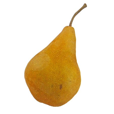 LAMINATED POSTER Ripe Bosc Bosc Pear Food Pear Healthy Fruit Poster Print 24 x 36