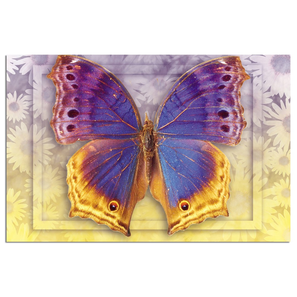 Tree-Free Greetings Butterfly #3 Boxed ECOnotes Blank Note Cards-FS66505