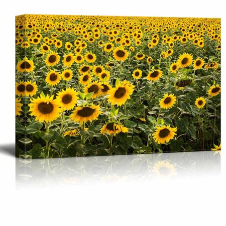 Large Gallery Metal (Canvas Prints Wall Art - Beautiful Scenery/Landscape Large Sunflower Field | Modern Wall Decor/Home Decoration Stretched Gallery Canvas Wrap Giclee Print & Ready to Hang - 12
