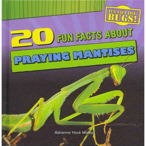 20 Fun Facts about Praying Mantises