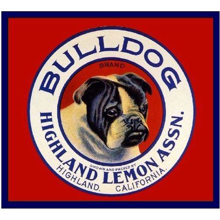 Highland English Bulldog Dog Orange Citrus Fruit Crate Label Vintage Art Print