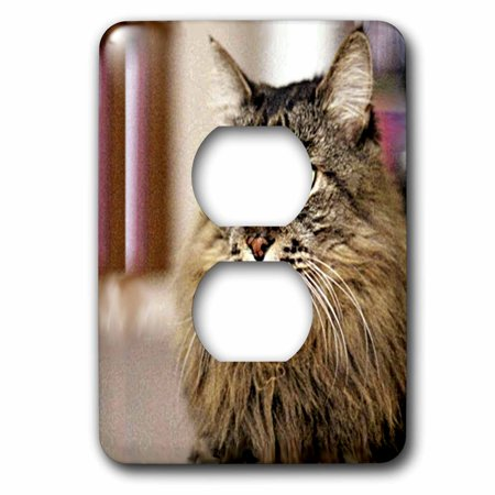 3dRose Maine Coon - 2 Plug Outlet Cover (lsp_305_6)