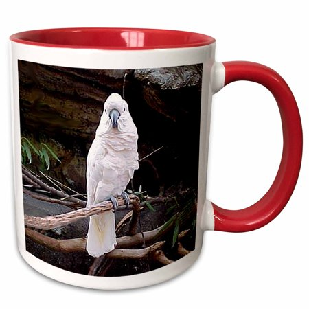 Red Cockatoo - 3dRose Moluccan Cockatoo - Two Tone Red Mug, 11-ounce