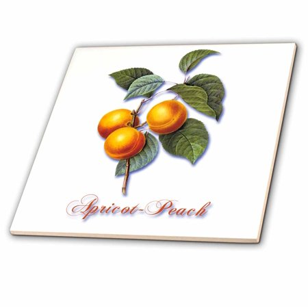 Botanical Tile - 3dRose Apricot-Peach, Botanical Print of Bright Yellow Fruits on a Branch - Ceramic Tile, 4-inch