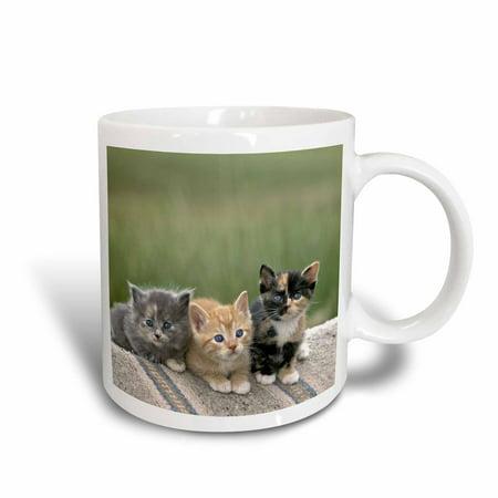 3dRose Colorado, Divide. Barn kittens, Cats - US06 BJA0186 - Jaynes Gallery, Ceramic Mug, 11-ounce