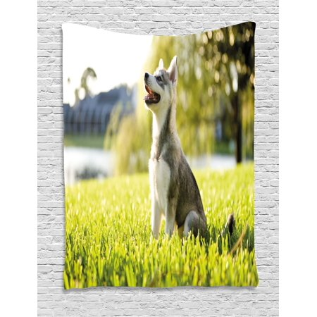 Alaskan Malamute Tapestry  Klee Kai Puppy Sitting On Grass Looking Up Friendly Young Cute Animal  Wall Hanging For Bedroom Living Room Dorm Decor  40W X 60L Inches  Multicolor  By Ambesonne