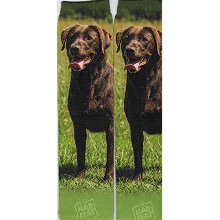 Chocolate Labrador Retriever Sublimated Socks - One Size