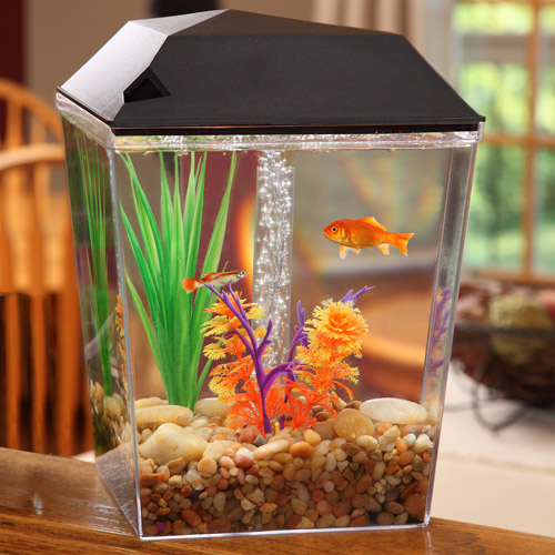 Aqua Culture 1 Gallon Aquarium Starter Kit - Walmart.com
