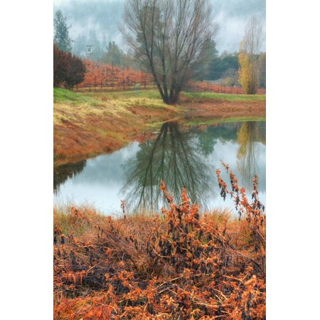 Misty Autumn Morning at Calistoga Pond Print Wall Art By Vincent