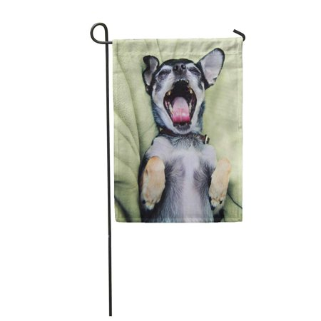 KDAGR Gray Dog Cute Birthday Chihuahua on Green Fuzzy Puppy Garden Flag Decorative Flag House Banner 12x18 inch