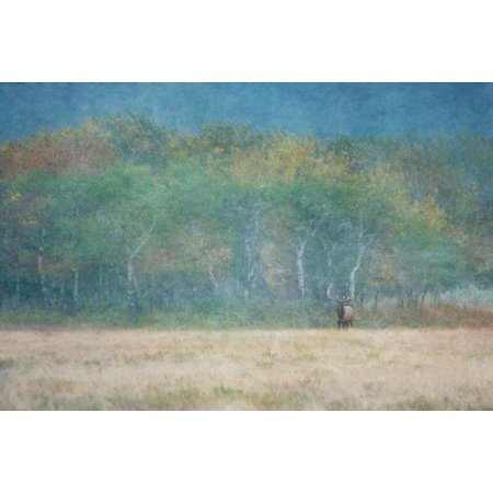 Meadow at Dusk, Fine Art Photograph By: Roberta Murray; One 36x24in Fine Art Paper Giclee Print