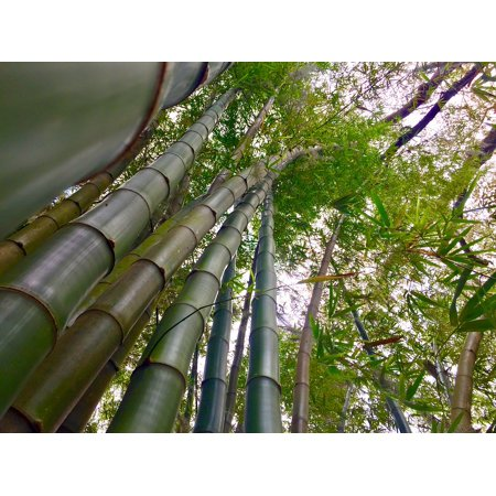 Framed Art for Your Wall Plant Garden Bamboo Stalks Green Asia China Zen 10x13 Frame