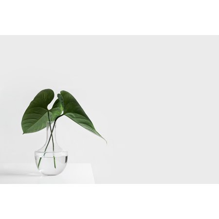 Laminated Poster Leaves Plants Vase Aesthetic White Table Poster Print 11 x 17