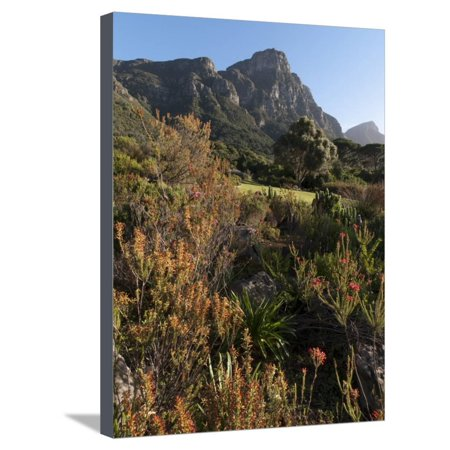 Kirstenbosch National Botanical Garden, Cape Town, South Africa, Africa Stretched Canvas Print Wall Art By Sergio Pitamitz ()