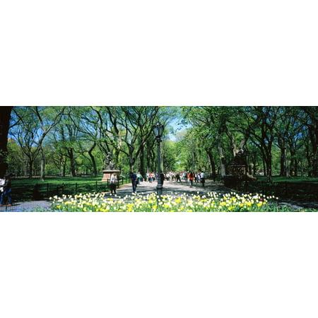 The Mall and Literary walk Central Park Manhattan New York City New York State USA Poster (Manhattan Mall)