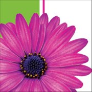 """Club Pack of 216 Daisy Power Disposable 2-Ply Beverage Napkins 5"""""""