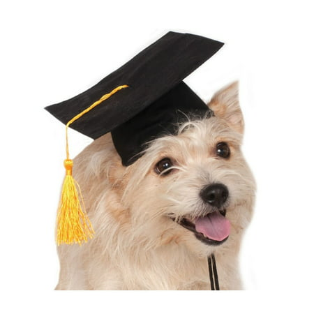 Halloween Black Graduation Hat Pet Costume - Hot Costumes For Halloween