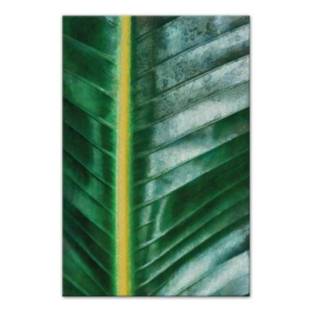 palm leaf close up 20x30 canvas wall art walmart com