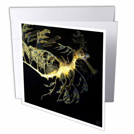 3Drose Leafy Sea Dragon Seahorse  Phycodurus Eques   Greeting Cards  6 X 6 Inches  Set Of 6