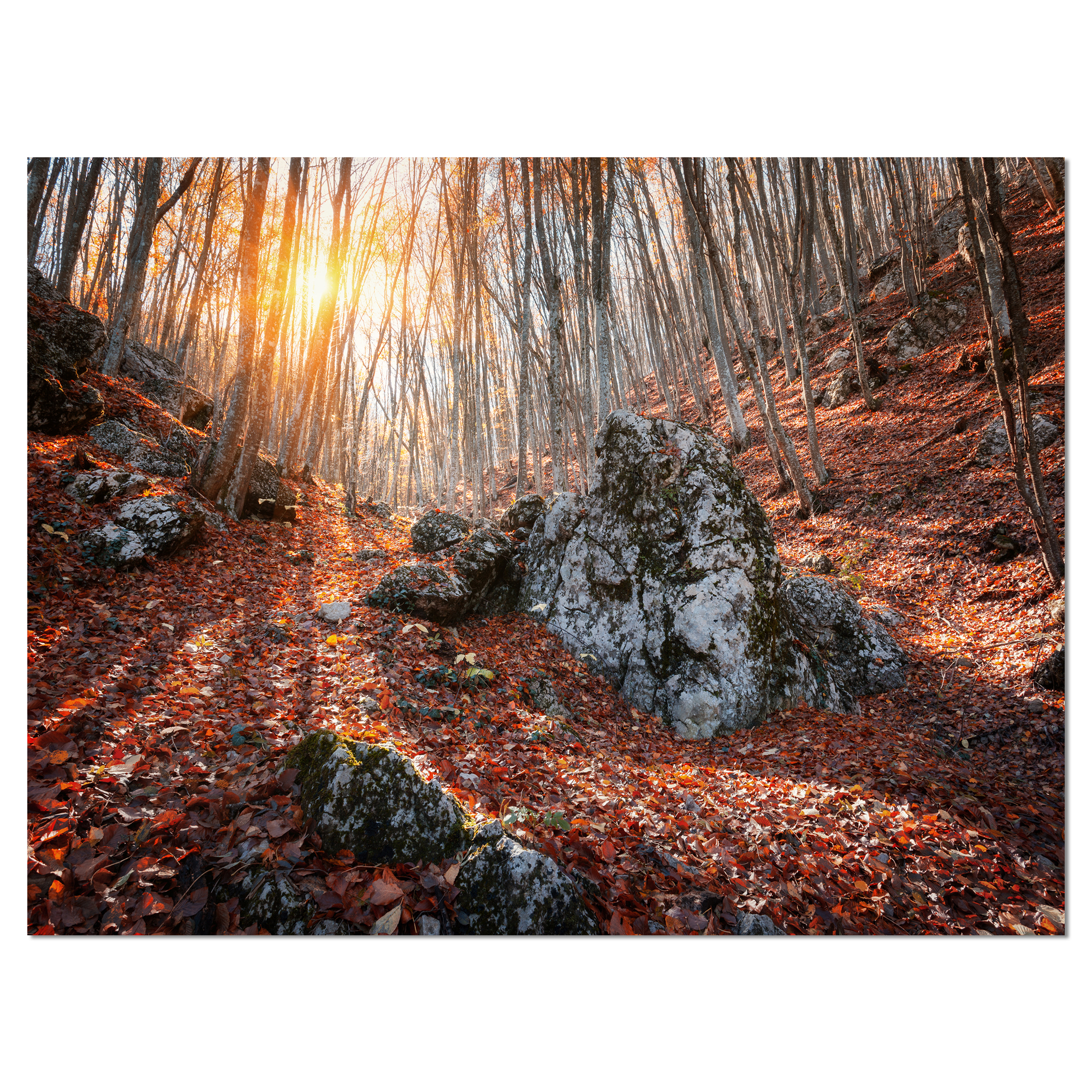 Rocky Red Autumn Forest - Landscape Photography Canvas Art Print - image 2 of 3