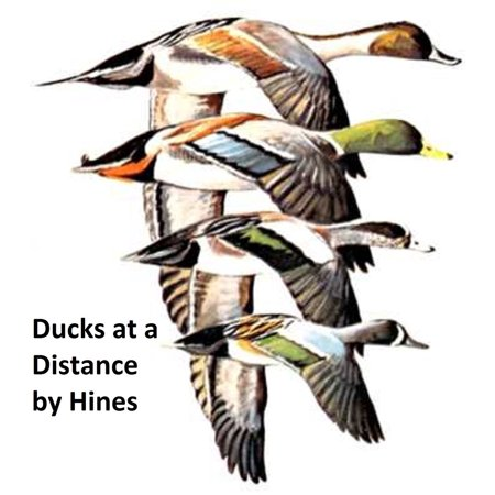 Ducks at a Distance: a Waterfowl Identification Guide, Illustrated -