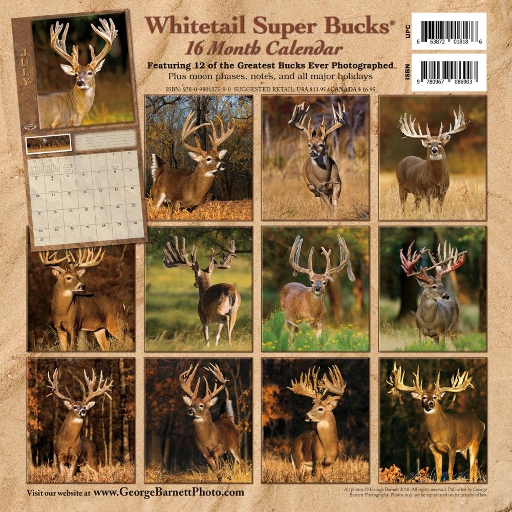 Deer Whitetail Super Bucks Wall Calendar, Deer by George Barnett