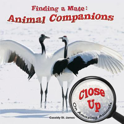 Finding A Mate  Animal Companions